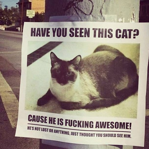 haha-have-you-seen-this-cat-meme-lol