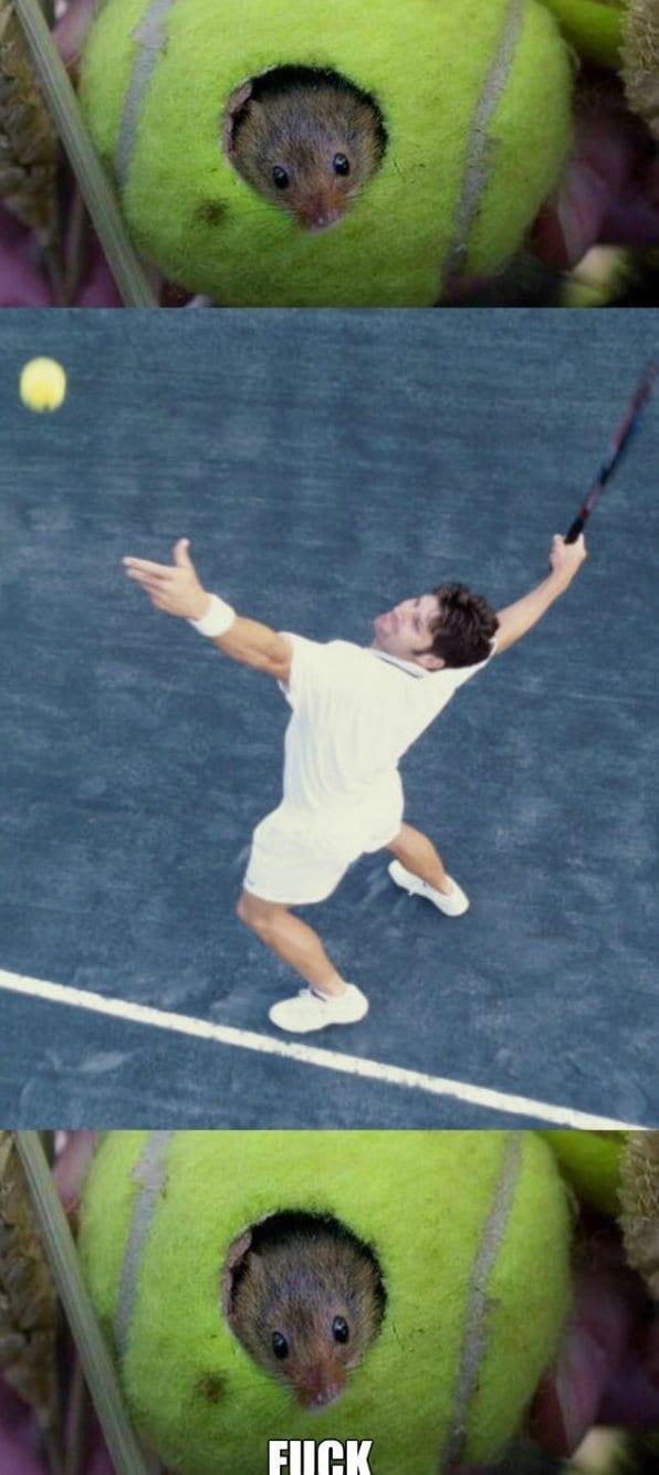 tennis-mouse-lol-meme