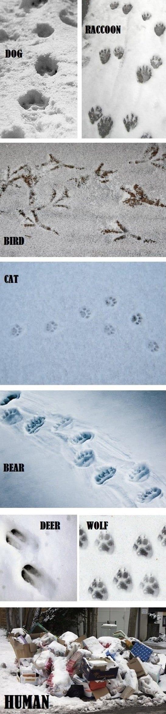 2014-jokes-tracks-in-the-snow
