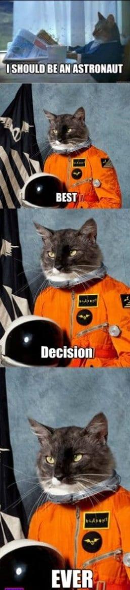 2014-meme-astrocat