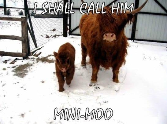best-meme-cows