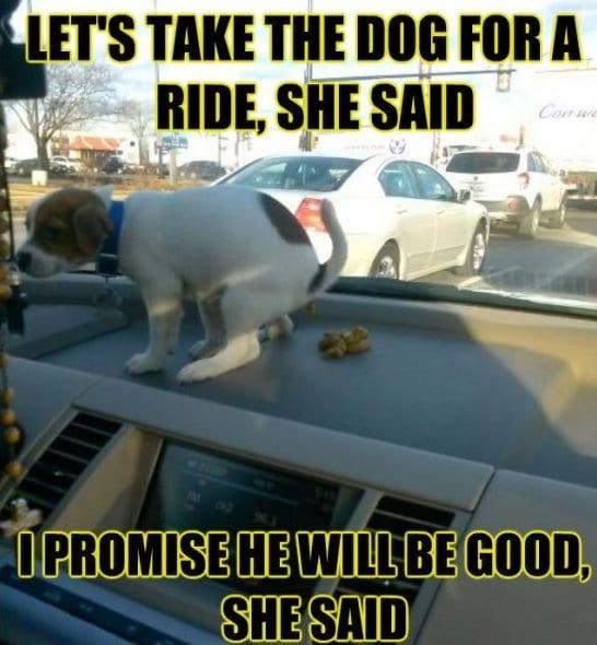 best-meme-dammit-dog