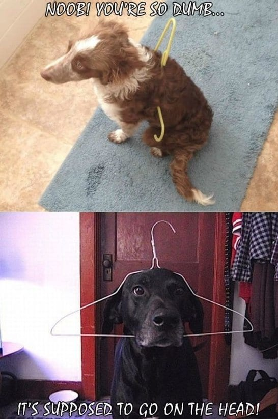 best-meme-dumb-dogs
