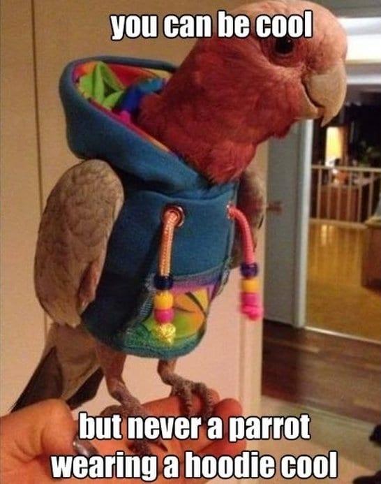 best-meme-parrot