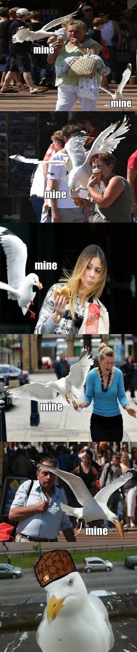 best-meme-seagull