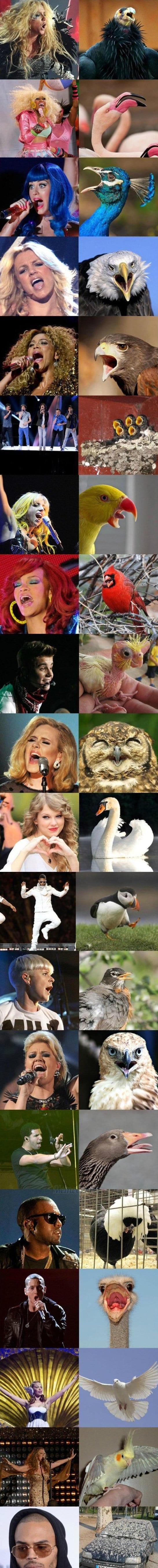 birds-looks-like-celebirties