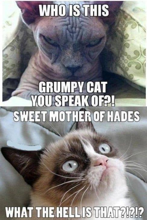 evil-cat-vs-grumpy-cat-meme