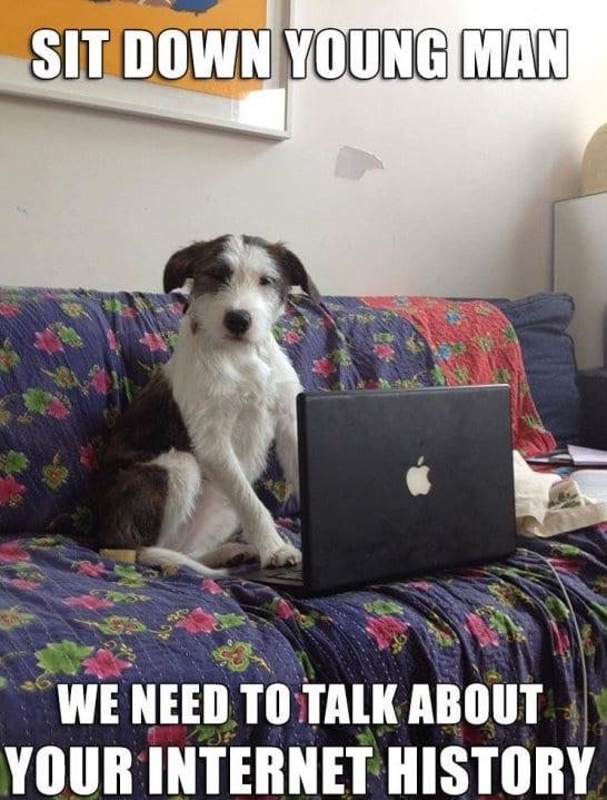 Brown dog face meme - photo#13