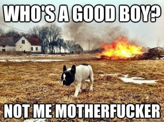 funny-dog-2014