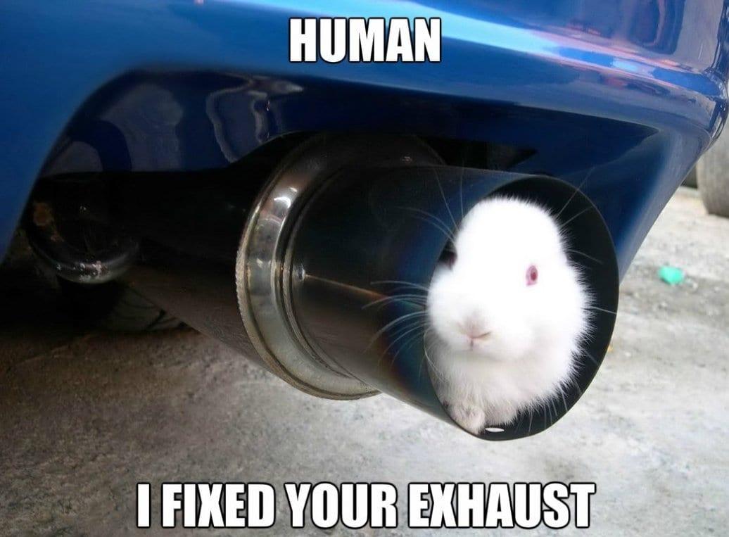 funny-engineer-rabbit