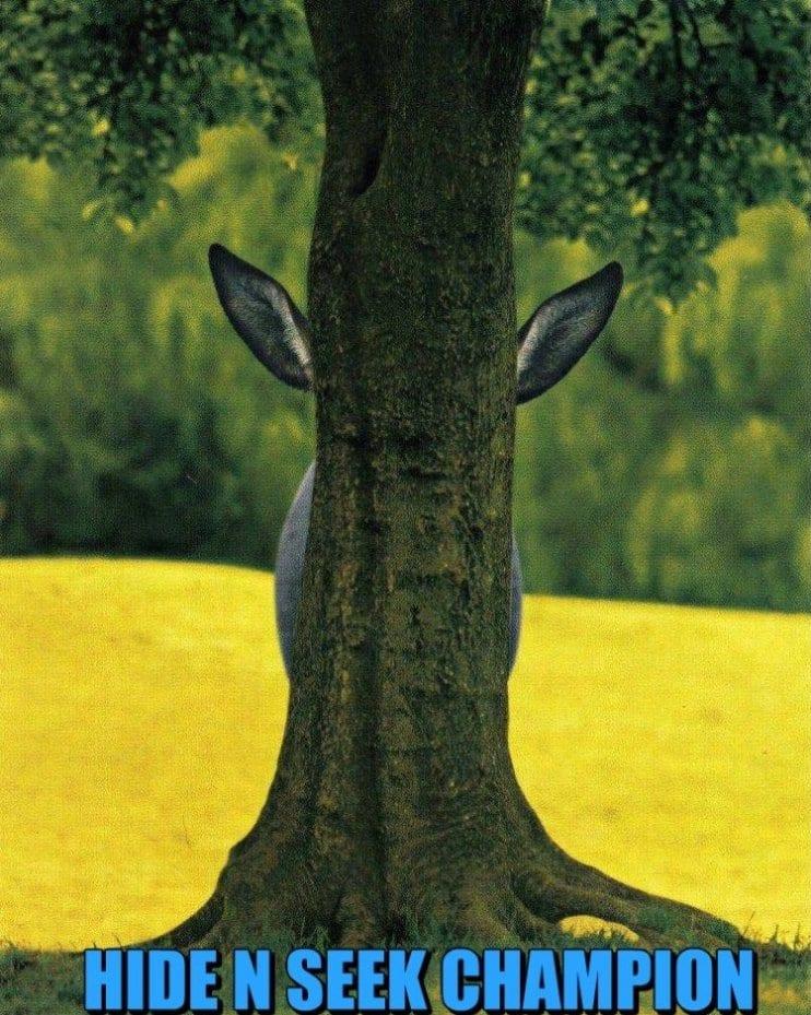 funny-hide-n-seek