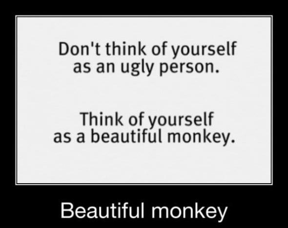 funny-image-2014-monkey
