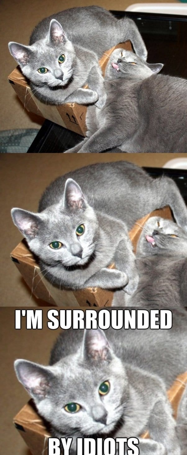 funny-images-two-cats-and-a-box