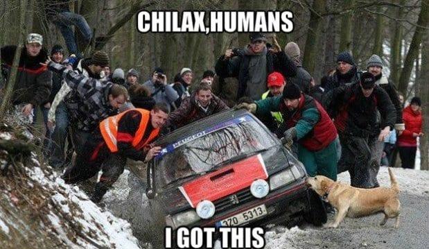 funny-lol-meme-2014-super-dog