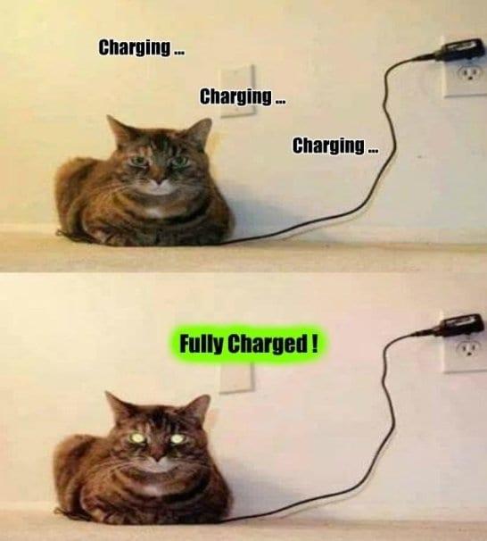 funny-meme-charging-the-cat