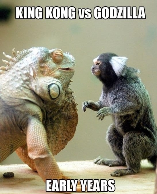 funny-meme-king-kong-vs-godzilla