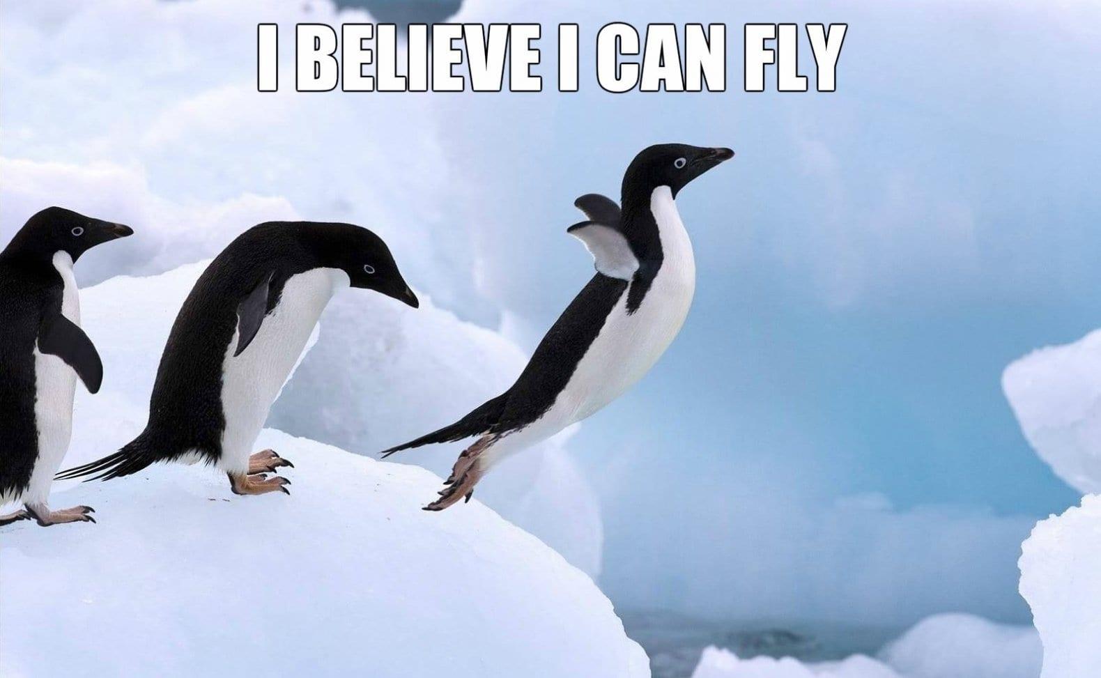 funny-penguins
