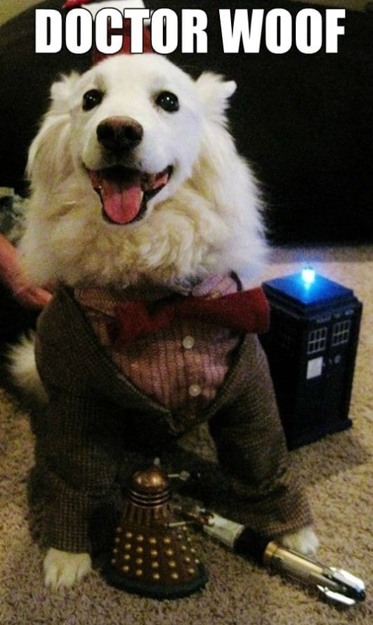 funny-pics-2014-doctor-woof