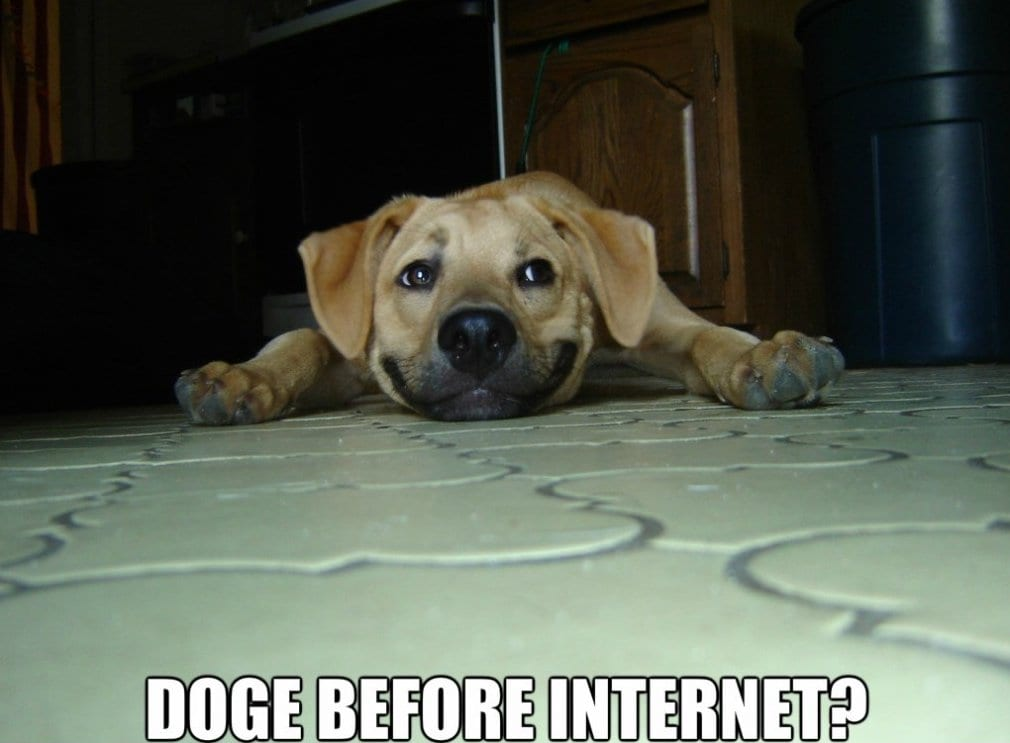 funny-pics-2014-dogs-before-internet