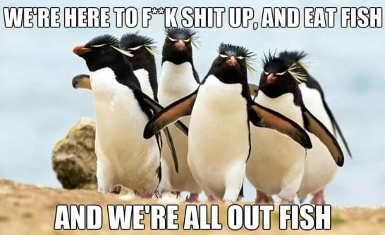 funny-picture-2014-gangsta-penguins
