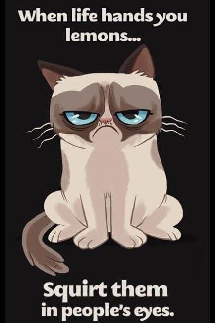 funny-pictures-2014-grumpy-cat-is-grumpy