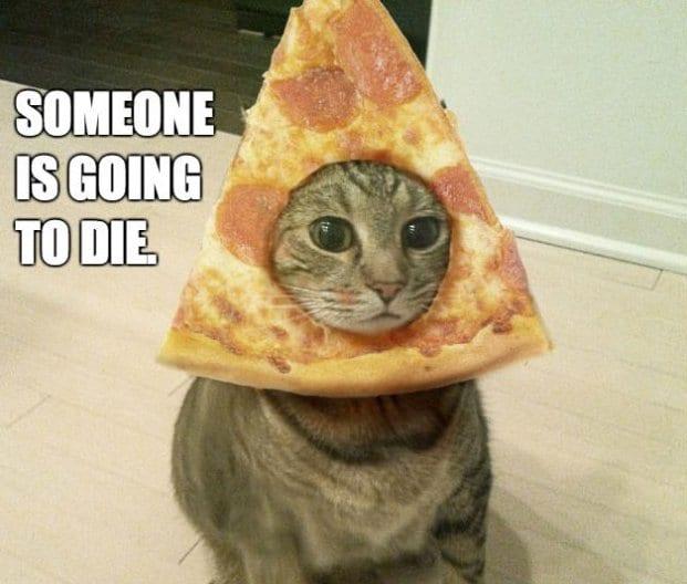 funny pizza cat