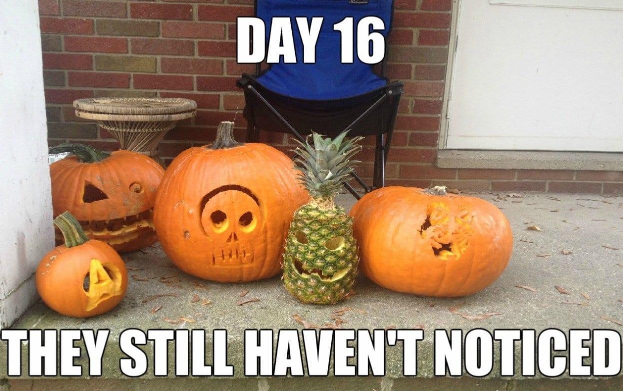 funny-pictures-lol-2014-ninja-lvl-pineapple