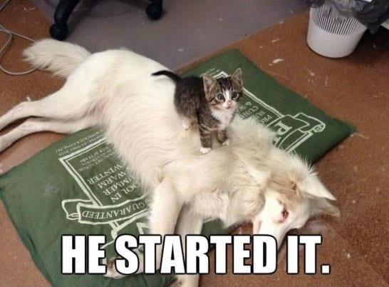 funny-pictures-meme-u-messed-with-the-wrong-cat