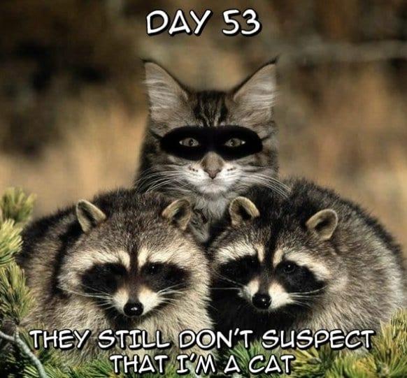 funny-pictures-lol-meme-2014-like-a-ninja
