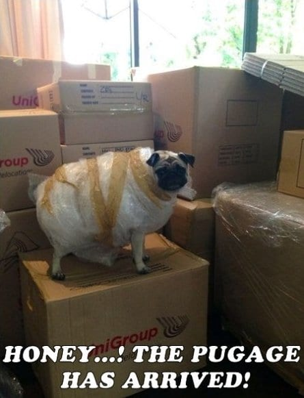 funny-the-pugage-has-arrived