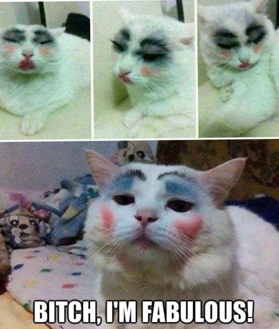 haha-fabulous-cat