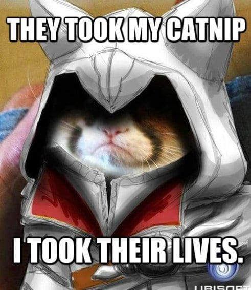 haha-grumpy-cat-assassin