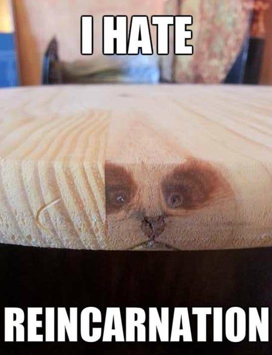jokes-2014-grumpy-cat-reincarnation