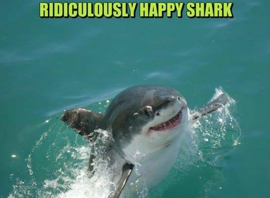 jokes-2014-happy-shark