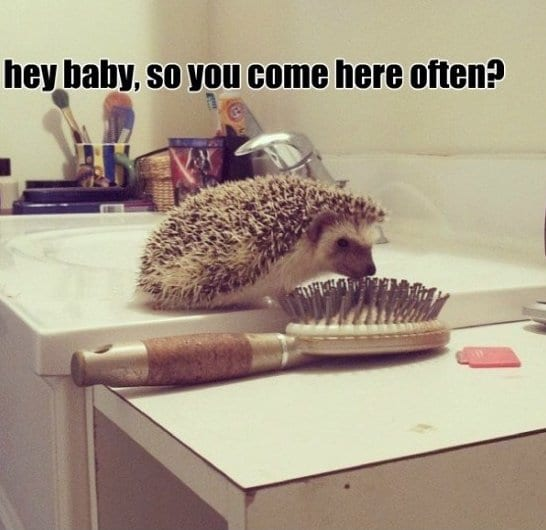 jokes-2014-hedgehog