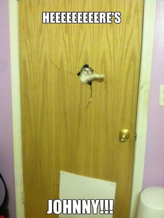 lol-2014-the-shining-cat-edition
