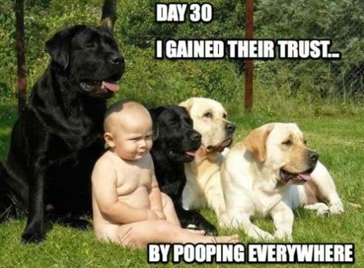 lol-i-gained-their-trust
