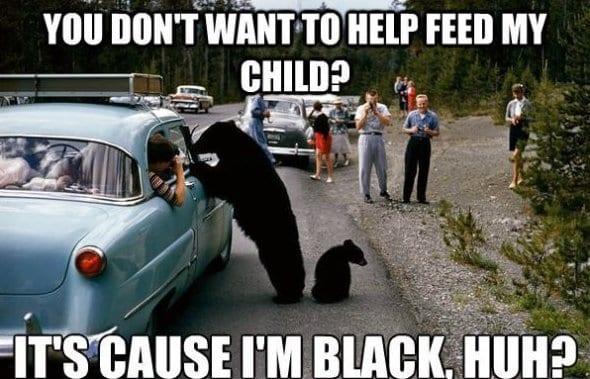 lol-meme-haha-2014-black-bear