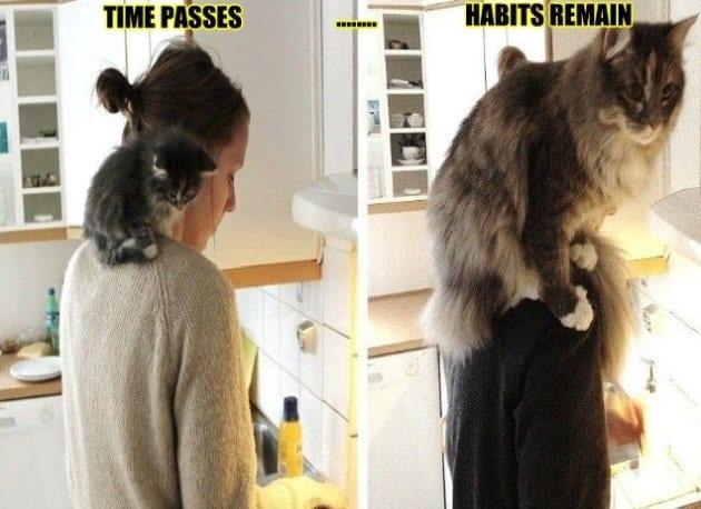lol-meme-haha-2014-cats-never-change