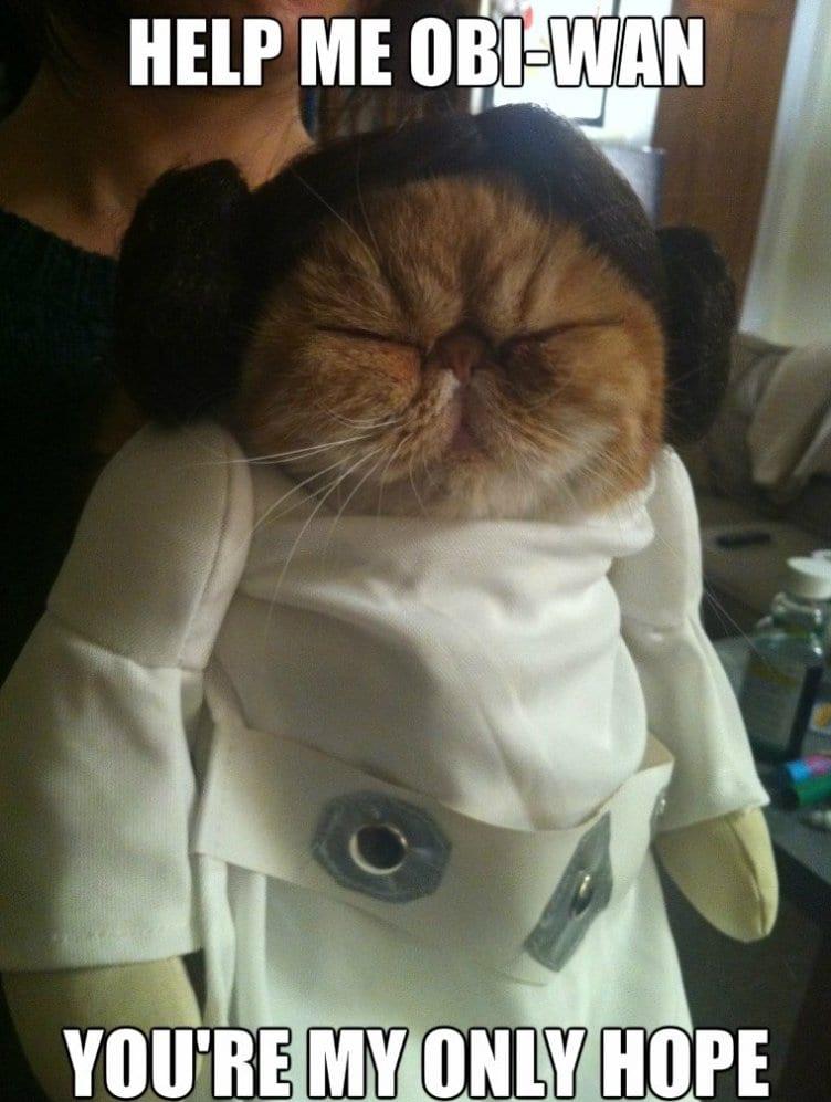 lol-meme-haha-2014-derpy-cat-leia