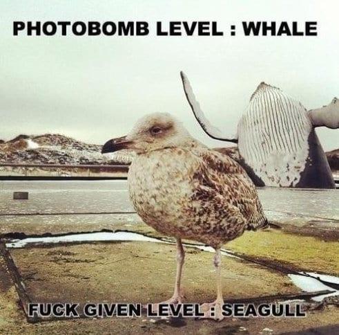 lol-pics-2014-photobomb
