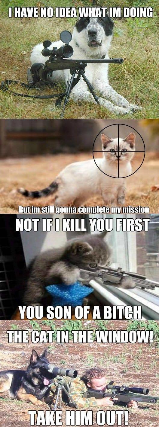 meme-dog-vs-cat