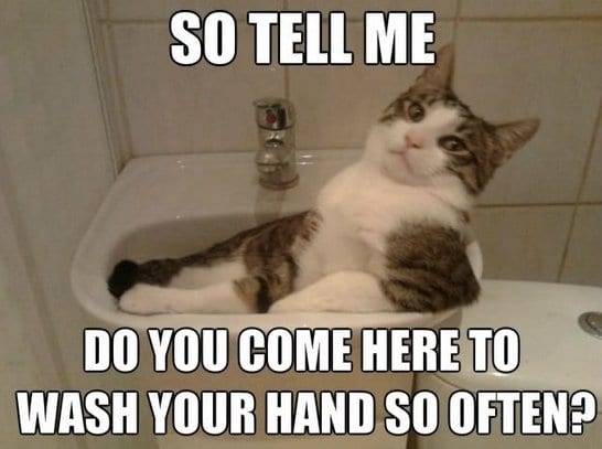 meme-2014-cat-acting-smooth
