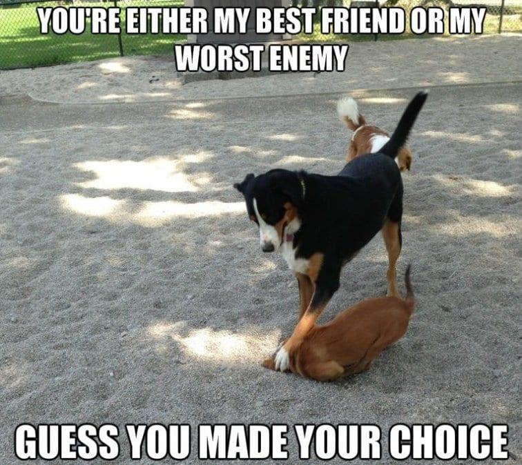 Pin 2014 Funny Dog Memes on Pinterest