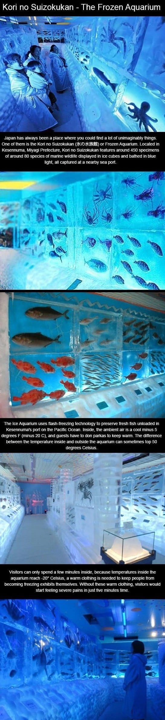 meme-2014-kori-no-suizokukan-the-frozen-aquarium