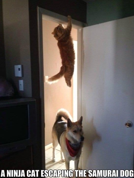 meme-2014-ninja-cat