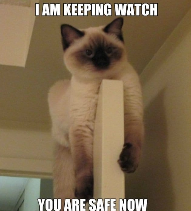meme-2014-watch-cat