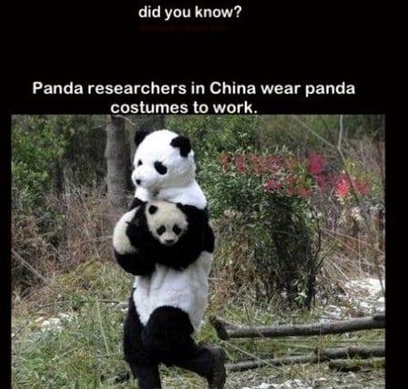 meme-lol-pandas