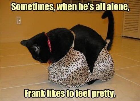 pretty-cat
