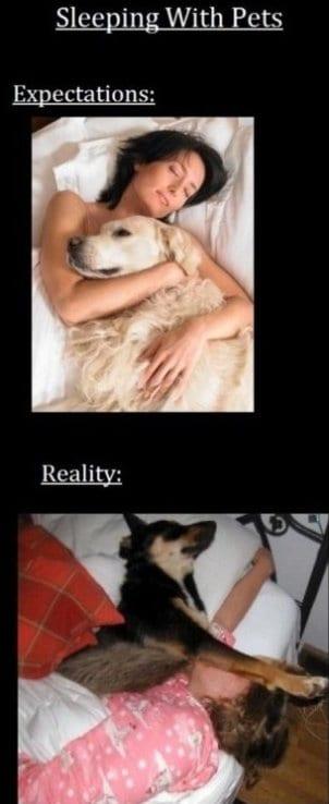 november-meme-lol-2013-sleeping-with-pets-expectations-vs-reality